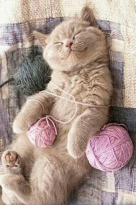 Van Katze Bilder - Van Katze Bilder