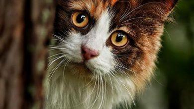 Verliebte Katzen Bilder 390x220 - Verliebte Katzen Bilder