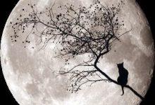 Verliebte Katzen Bilder Bilder Kostenlos 220x150 - Verliebte Katzen Bilder Bilder Kostenlos