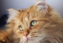 Vermisste Katzen 220x150 - Vermisste Katzen