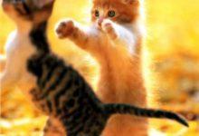 Verrückte Katzen Bilder 220x150 - Verrückte Katzen Bilder
