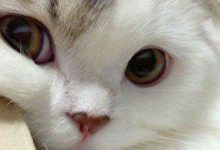 Verrückte Katzenbilder 220x150 - Verrückte Katzenbilder