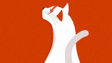 Verschiedene Katzenrassen Bilder Bilder Kostenlos 390x220 - Verschiedene Katzenrassen Bilder Bilder Kostenlos