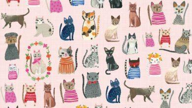 Very Cute Cat Images Bilder 390x220 - Very Cute Cat Images Bilder
