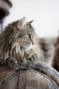 Very Cute Cat Pics Bilder 200x300 - Very Cute Cat Pics Bilder