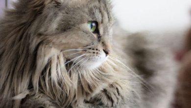 Very Cute Cat Pics Bilder 390x220 - Very Cute Cat Pics Bilder