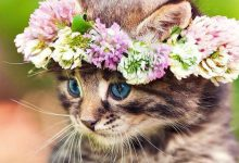 Very Cute Cat Pictures Bilder 220x150 - Very Cute Cat Pictures Bilder