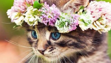 Very Cute Cat Pictures Bilder 390x220 - Very Cute Cat Pictures Bilder
