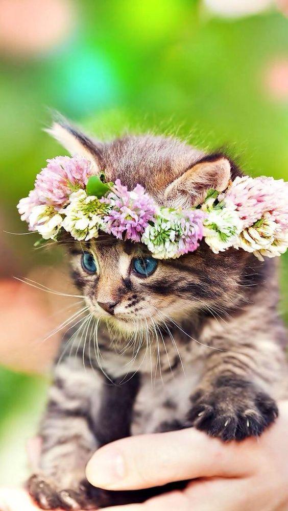 Very Cute Cat Pictures Bilder - Very Cute Cat Pictures Bilder
