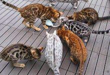 Very Funny Cat Pictures Bilder 220x150 - Very Funny Cat Pictures Bilder
