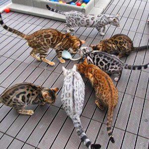 Very Funny Cat Pictures Bilder 300x300 - Very Funny Cat Pictures Bilder