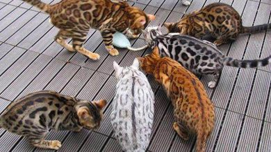 Very Funny Cat Pictures Bilder 390x220 - Very Funny Cat Pictures Bilder