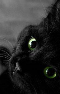 Wandbild Katze 193x300 - Wandbild Katze