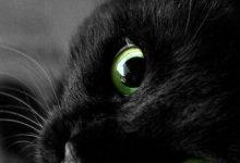 Wandbild Katze 220x150 - Wandbild Katze