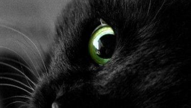 Wandbild Katze 390x220 - Wandbild Katze