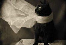 Weiße Katzen Bilder Bilder Kostenlos 220x150 - Weiße Katzen Bilder Bilder Kostenlos