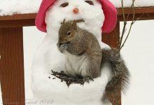 Weihnachten Bilder Clipart 220x150 - Weihnachten Bilder Clipart