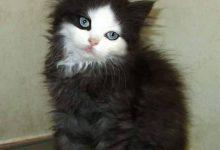 Weihnachten Bilder Katzen 220x150 - Weihnachten Bilder Katzen