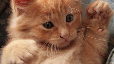Welpen Katzen Kaufen 390x220 - Welpen Katzen Kaufen