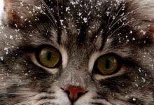 What Cat Picture Bilder 220x150 - What Cat Picture Bilder