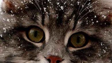 What Cat Picture Bilder 390x220 - What Cat Picture Bilder