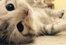 Whatsapp Bilder Katzen 220x150 - Whatsapp Bilder Katzen