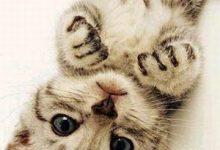 Whatsapp Katzenbilder 220x150 - Whatsapp Katzenbilder