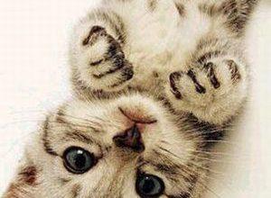Whatsapp Katzenbilder 300x220 - Whatsapp Katzenbilder
