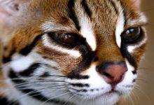 Whiskas Katze 220x150 - Whiskas Katze