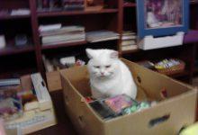White Cat Pictures Bilder 220x150 - White Cat Pictures Bilder