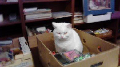 White Cat Pictures Bilder 390x220 - White Cat Pictures Bilder