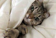 Witzige Bilder Katzen Bilder Kostenlos 220x150 - Witzige Bilder Katzen Bilder Kostenlos