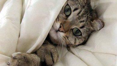 Witzige Bilder Katzen Bilder Kostenlos 390x220 - Witzige Bilder Katzen Bilder Kostenlos