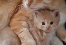 Witzige Katzenfotos 220x150 - Witzige Katzenfotos