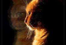 Www Katzen Kaufen 220x150 - Www Katzen Kaufen