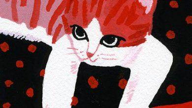 Zeig Mir Bilder Von Katzen Bilder Kostenlos 390x220 - Zeig Mir Bilder Von Katzen Bilder Kostenlos