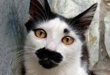 Zeig Mir Katzenbilder Bilder Kostenlos 220x150 - Zeig Mir Katzenbilder Bilder Kostenlos