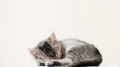 Zeige Bilder Von Katzen 390x220 - Zeige Bilder Von Katzen