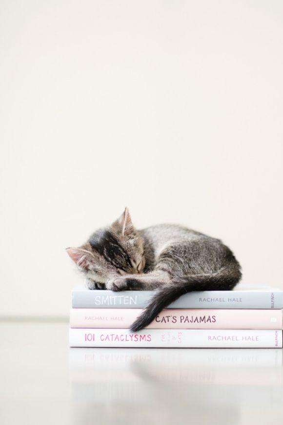 Zeige Bilder Von Katzen - Zeige Bilder Von Katzen