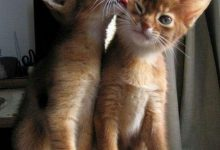 adorable cat pics bilder 220x150 - adorable cat pics bilder