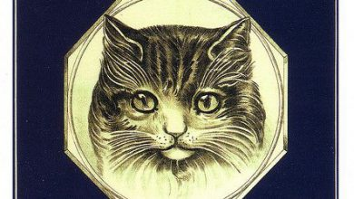 all cat breeds with pictures bilder 390x220 - all cat breeds with pictures bilder