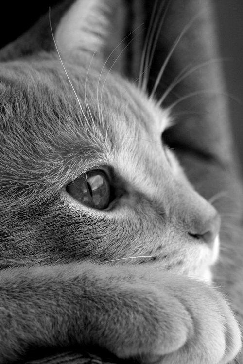 beautiful cat photos download bilder - beautiful cat photos download bilder