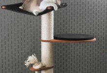 cartoon cat pictures bilder 220x150 - cartoon cat pictures bilder