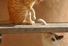 cat and kitten wallpapers bilder 220x150 - cat and kitten wallpapers bilder