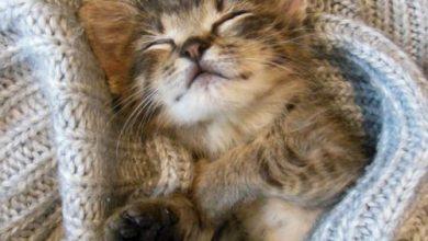 cat breeds bilder 390x220 - cat breeds bilder
