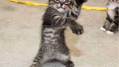 cat breeds with photos bilder 390x220 - cat breeds with photos bilder
