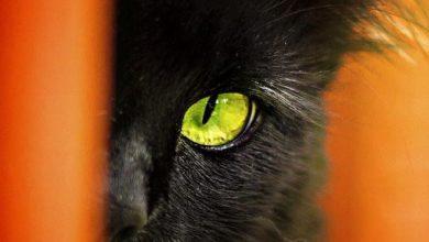 cat family images bilder 390x220 - cat family images bilder