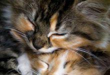cat pictures bilder 220x150 - cat pictures bilder