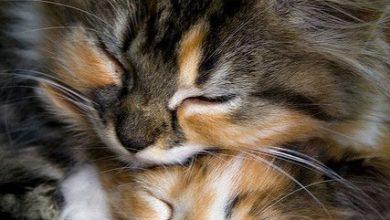 cat pictures bilder 390x220 - cat pictures bilder