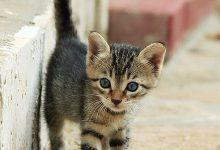 cat species bilder 220x150 - cat species bilder